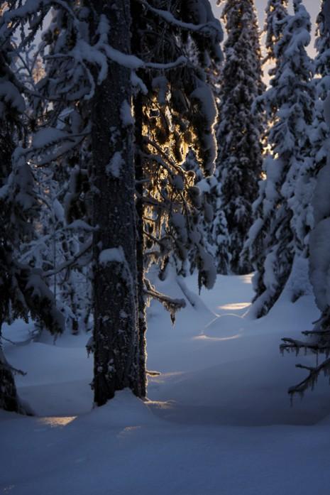 Foto John Pettersson Ljus i gran small